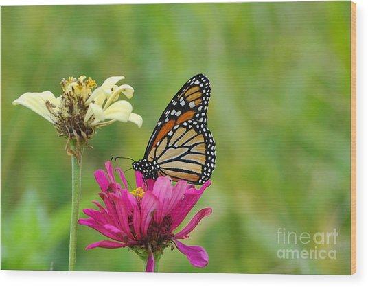 Monarch 10 Wood Print