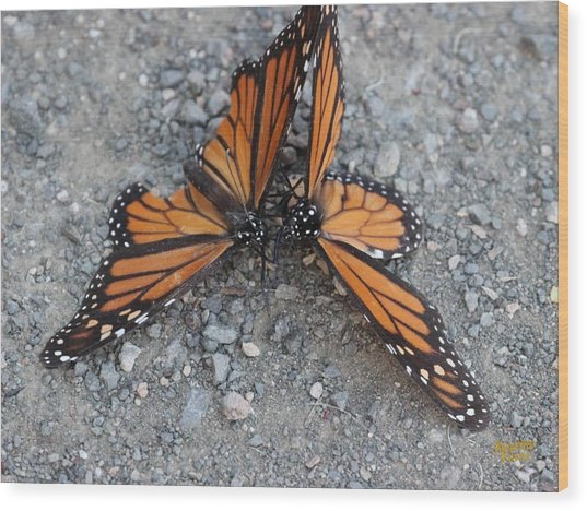 Monarch Afterglow Wood Print