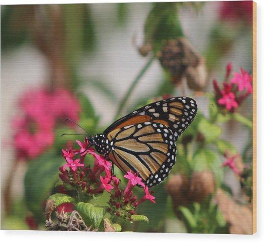 Monarch Butterfly On Fuchsia Wood Print
