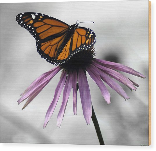 Monarch Butterfly Wood Print by Evelyn Patrick