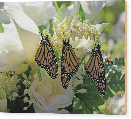 Monarch Butterfly Garden  Wood Print