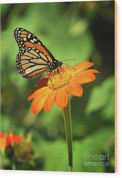 Monarch Butterfly II Vertical Wood Print