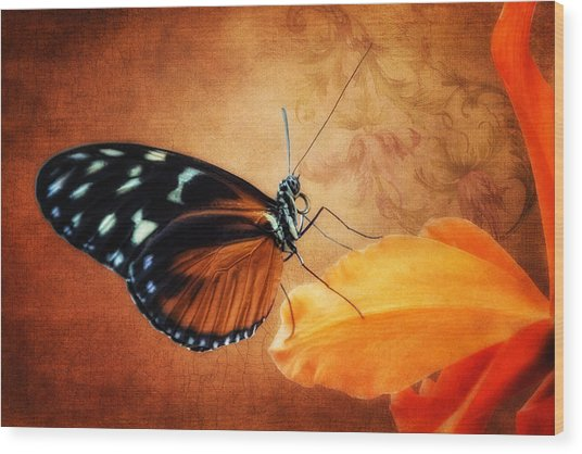 Monarch Butterfly On An Orchid Petal Wood Print
