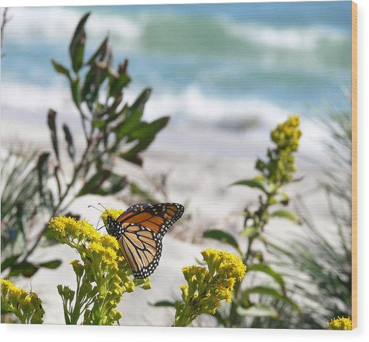 Monarch By The Sea Wood Print by Tom LoPresti