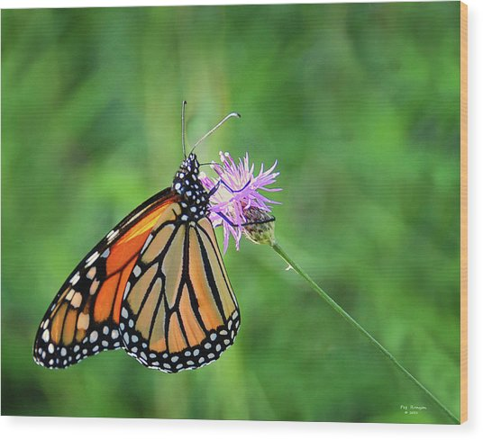 Monarch In The Meadow Wood Print