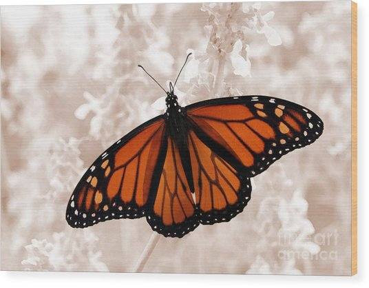 Monarch Wood Print by Jeannie Burleson