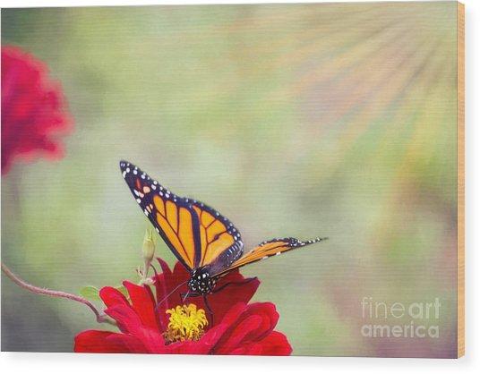 Monarch Magic Wood Print