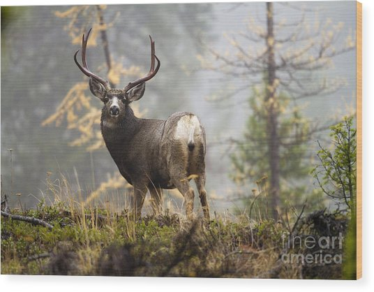 Monarch Of The Mountain Wood Print
