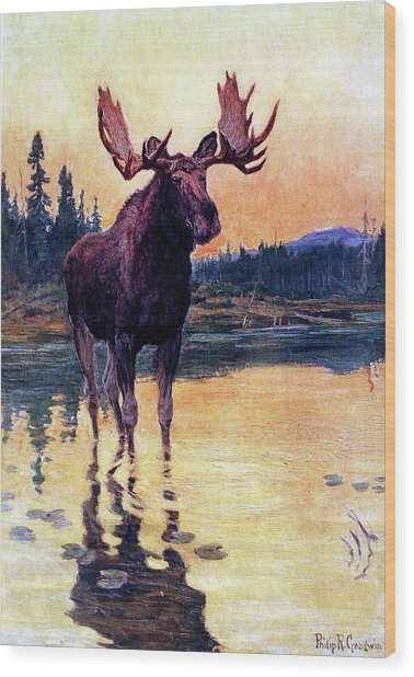 Monarch Of The North Wood Print by Philip R Goodwin