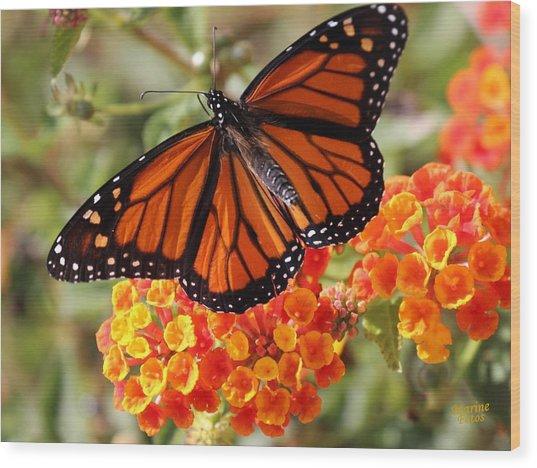 Monarch On 2 Flowers Wood Print