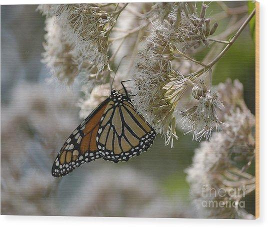 Monarch Pink Wood Print