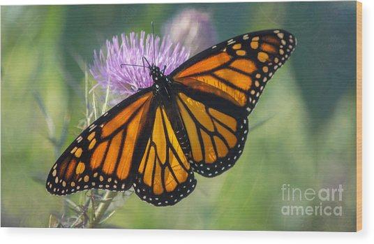 Monarch's Beauty Wood Print