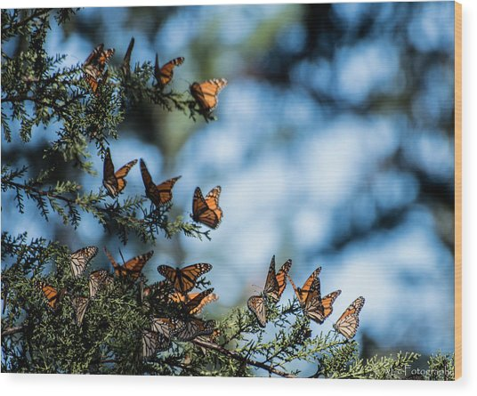 Monarchs In The Tree Wood Print