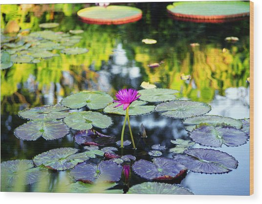 Monet Lilies Wood Print