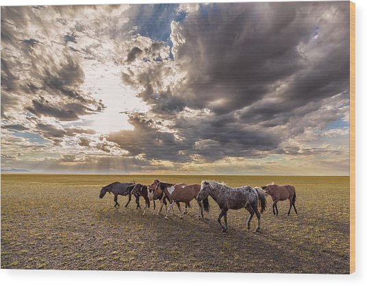 Wood Print featuring the photograph Mongolian Horses by Hitendra SINKAR