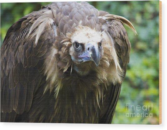 Monk Vulture 3 Wood Print