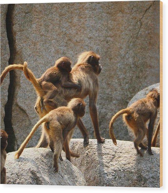 Monkey Family Wood Print
