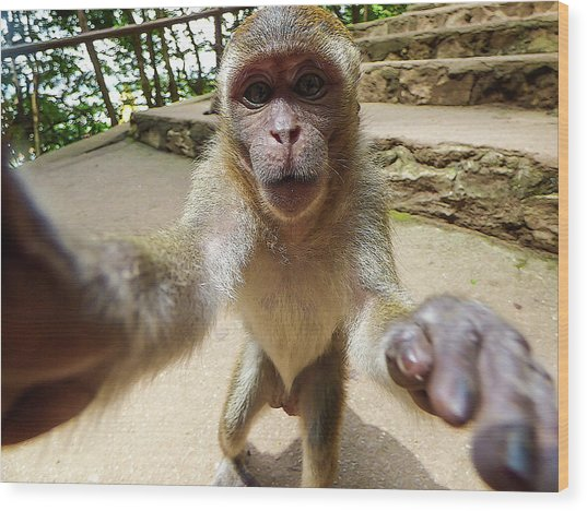 Monkey Taking A Selfie Wood Print