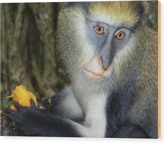 Monkey With His Mango Wood Print