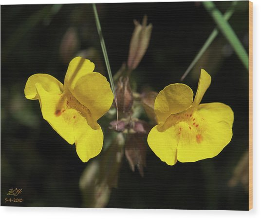 Monkeyflowers Wood Print