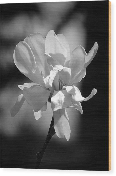 Monochrome Magnolia Wood Print
