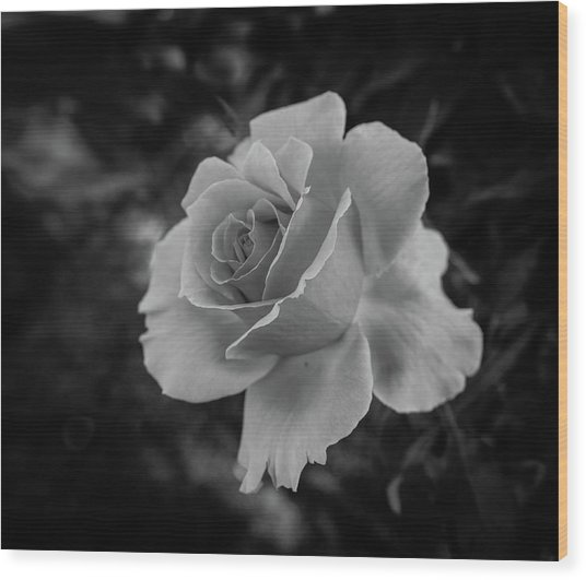 Monochrome Rose Macro Wood Print