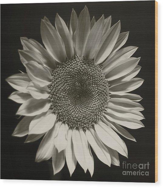 Monochrome Sunflower Wood Print