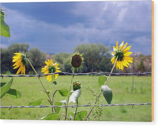 Monsoon Sunflowers Wood Print by Heather S Huston