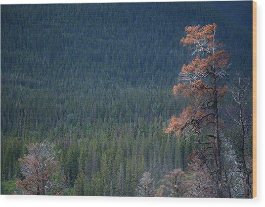 Montana Tree Line Wood Print