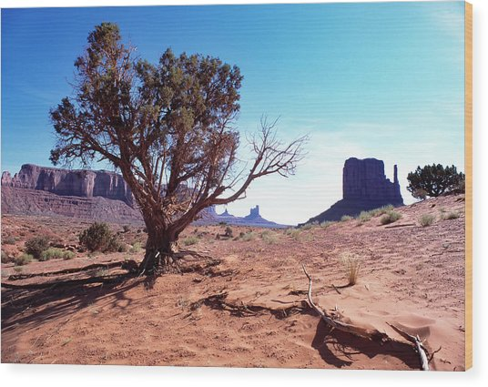 Monument Valley Tree 1 Wood Print by Kim Lessel