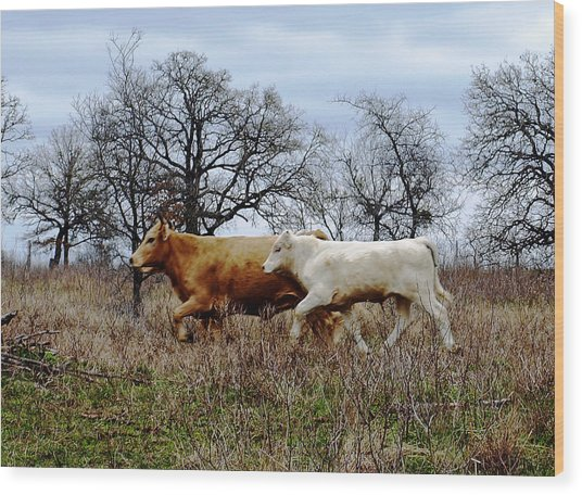 Moo On The Run Wood Print by James Granberry
