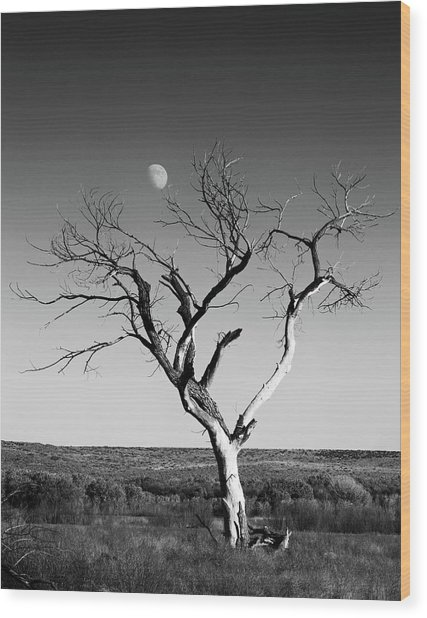 Moon And Memory At Bosque Del Apache N M Wood Print