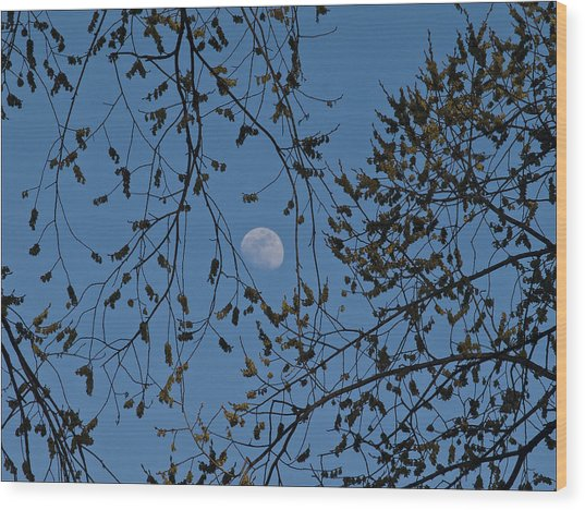 Moon And Trees 1 Wood Print