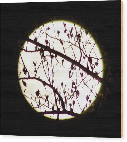 Moon Branches Wood Print