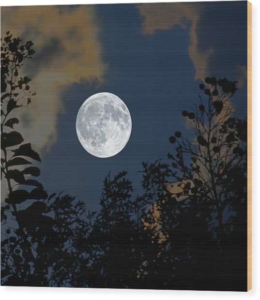 Moon Glo Wood Print