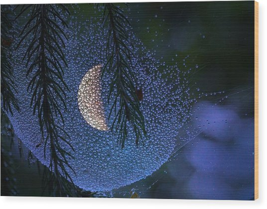 Moon In A Web Wood Print by Molly Dean