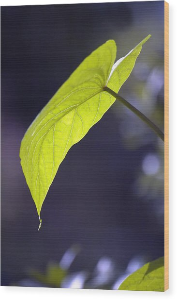 Moon Leaf Wood Print by Ross Powell