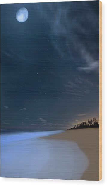 Moon Over Hobe Sound Beach Florida  Wood Print