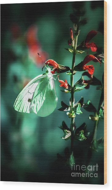 Moonlight Butterfly Wood Print