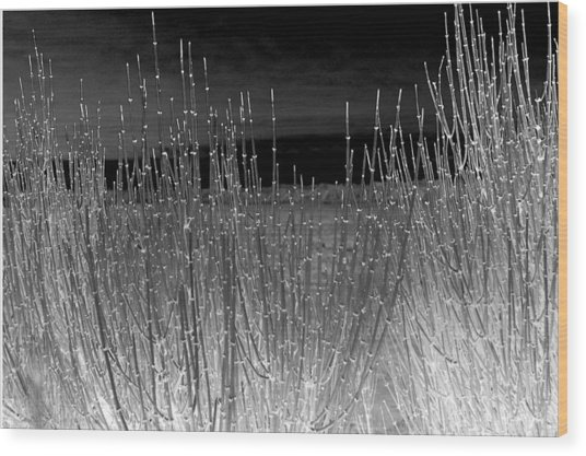 Moonlight On The Marsh Wood Print