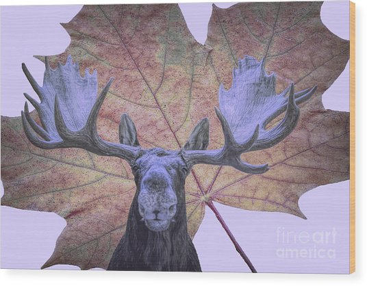 Wood Print featuring the photograph Moonlit Moose by Ray Shiu