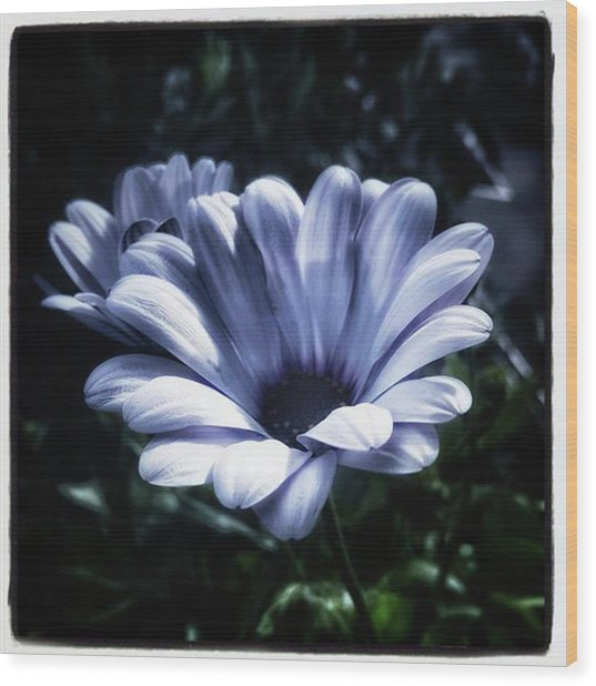 Wood Print featuring the photograph Moonlit Petals. From The Beautiful by Mr Photojimsf