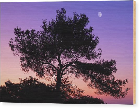 Moonlit Serenade Wood Print