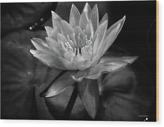 Moonlit Water Lily Bw Wood Print