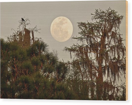 Moonrise Over Southern Pines Wood Print