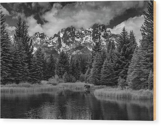 Moose At Schwabacher's Landing Wood Print