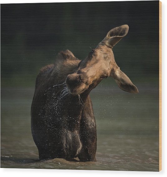 Moose Drool // Glacier National Park  Wood Print