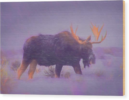 Moose In A Blizzard Wood Print