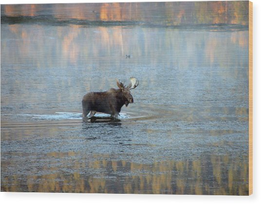 Moose In Autumn Snake Wood Print by Michael Riley