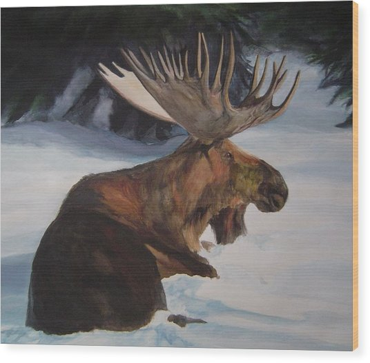 Moose In Winter Wood Print by Susan Tilley